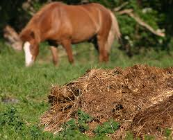Horse Manure Removal
